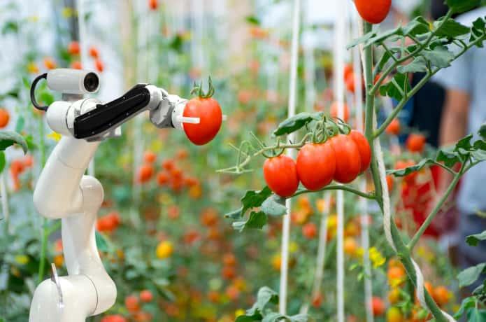 トマトを収穫するロボット