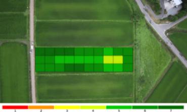 作物の状態解析データ