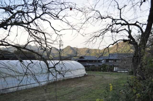 日本の圃場