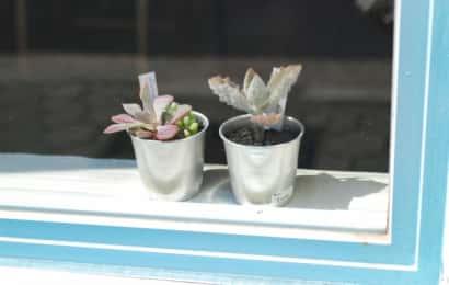 窓辺の多肉植物