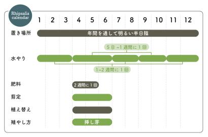 リプサリス栽培カレンダー