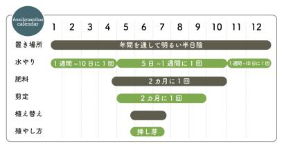 エスキナンサス 栽培カレンダー