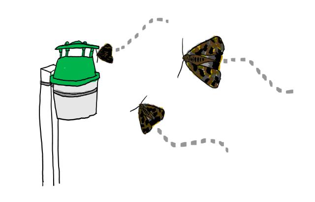 誘引剤の一種「トラップ」に引き寄せられるガの成虫