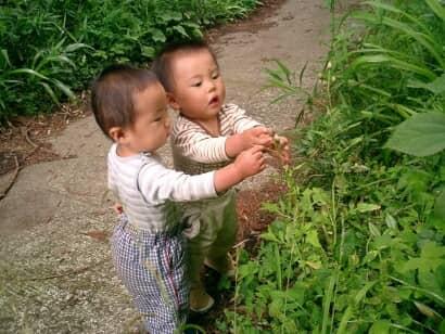 草を摘む子どもたち