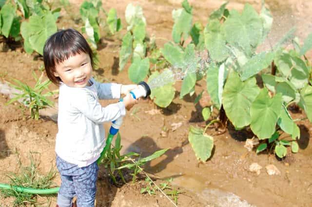 畑で水をやる子供