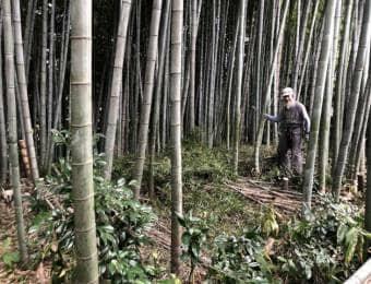 竹林を切る人