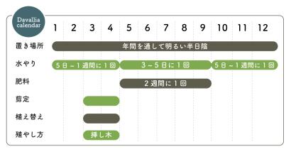 ダバリア栽培カレンダー