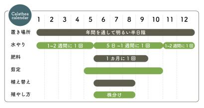 カラテア栽培カレンダー