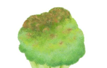 花蕾腐敗病におかされたブロッコリーの花蕾