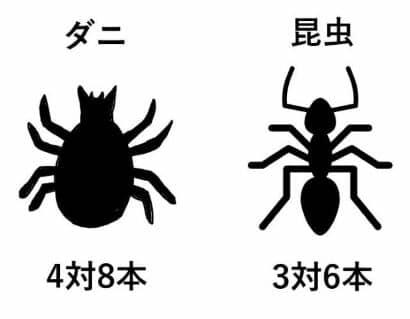 ダニ 昆虫