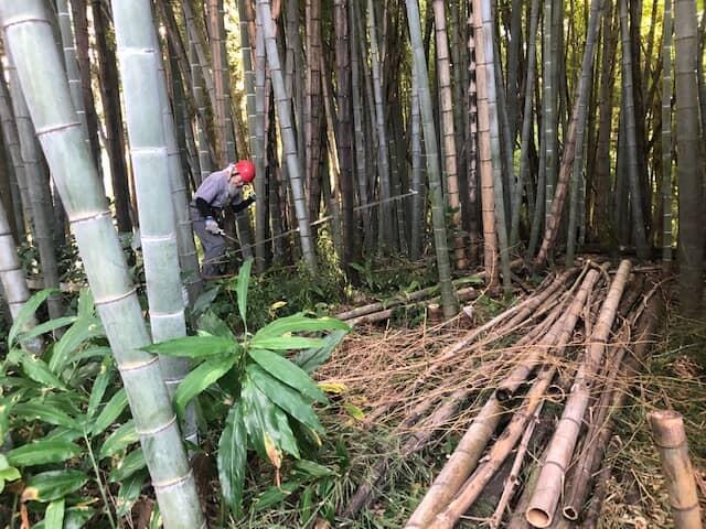 竹を切る人