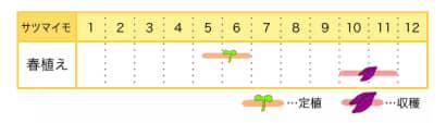 サツマイモの栽培カレンダー
