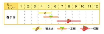 ミニトマトの栽培カレンダー