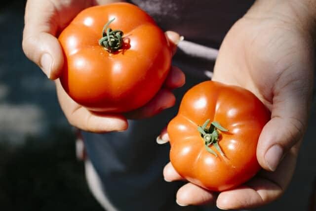 完熟トマトを手に持つ