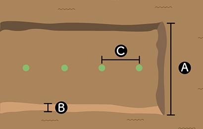 ショウガの栽培スペース