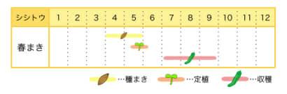 シシトウの栽培カレンダー