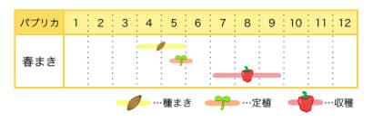 パプリカの栽培カレンダー