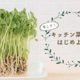 キッチン菜園特集