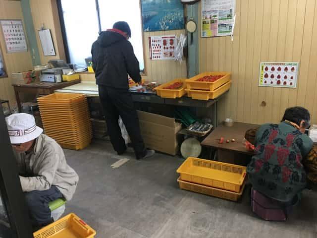 宇田川いちご農園作業場