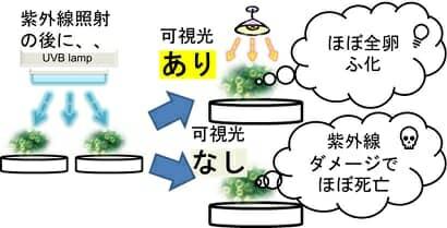 光回復効果実験イメージ
