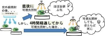 光回復タイムラグ実験イメージ