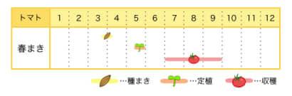 トマトの栽培カレンダー