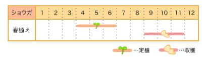 ショウガの栽培カレンダー
