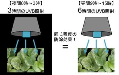 夜間照射の防除効果実証実験イメージ
