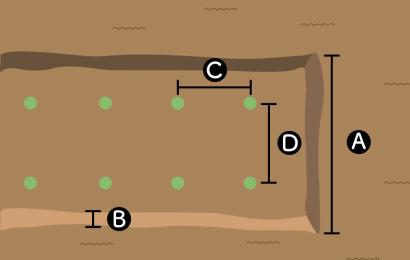 カリフラワーの栽培スペース