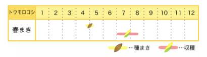 トウモロコシの栽培カレンダー
