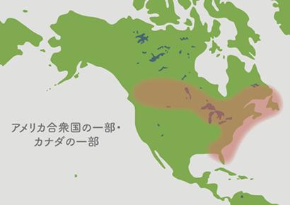 サラセニア原産地 地図