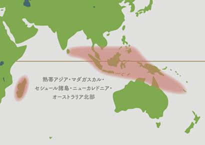 ウツボカズラ原産地 地図