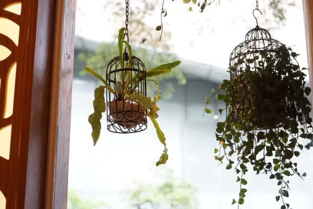 鳥かごに入れて吊るした観葉植物