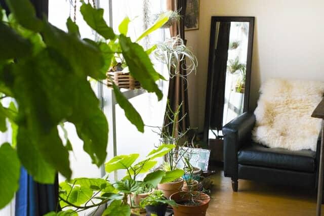 室内に置かれた観葉植物