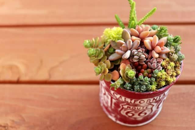 おしゃれな鉢に植えた多肉植物