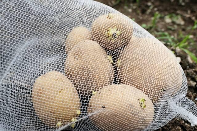 網に入った種芋