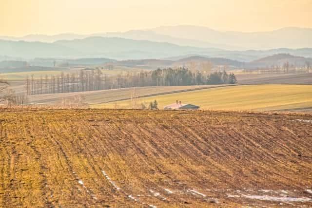 不耕起栽培の畑