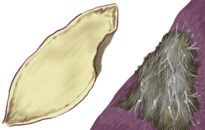 軟腐病におかされたサツマイモ
