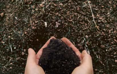 手に取った培養土