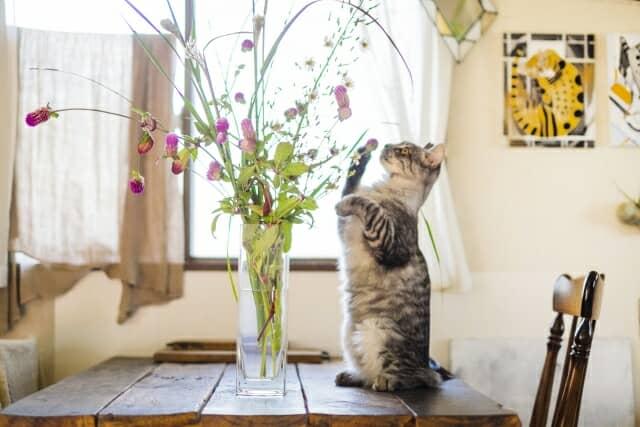 花瓶に活けた花で遊ぶ猫