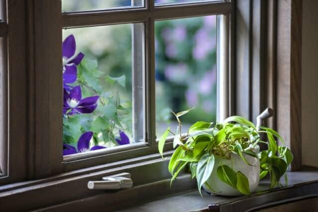 窓辺の小さな観葉植物