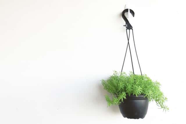 壁に吊るした観葉植物