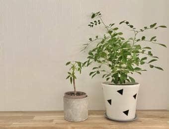 おしゃれな鉢に入った観葉植物