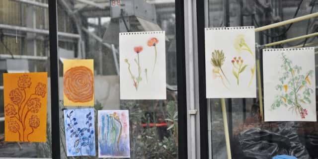 窓に飾られた植物のイラストたち