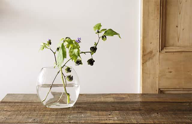 花瓶に活けた花
