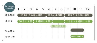 リトープス栽培カレンダー