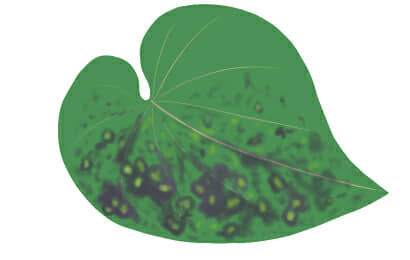 斑紋モザイク病におかされたサツマイモの茎葉