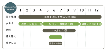 ビカクシダ栽培カレンダー