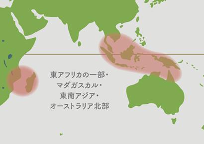 ビカクシダ原産地 地図1
