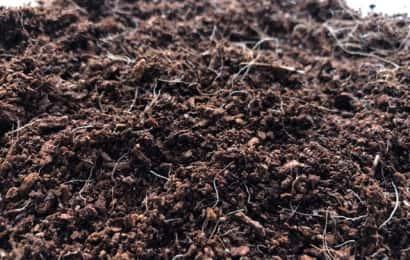 植物の根が混ざった土